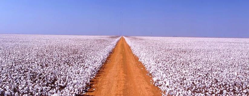 Plantação de algodão na SLC Agrícola